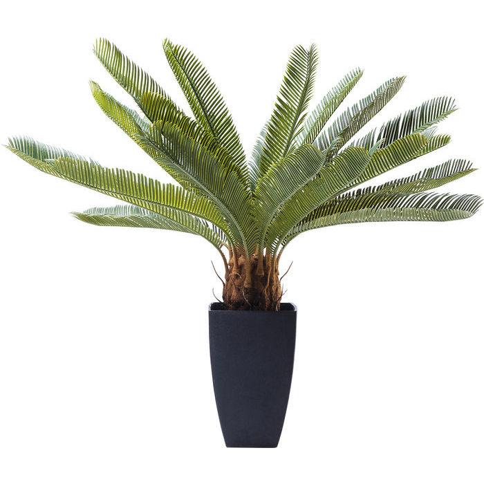 Cycas Tree