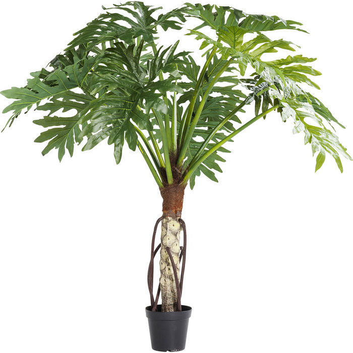 Monstera Pot Plant