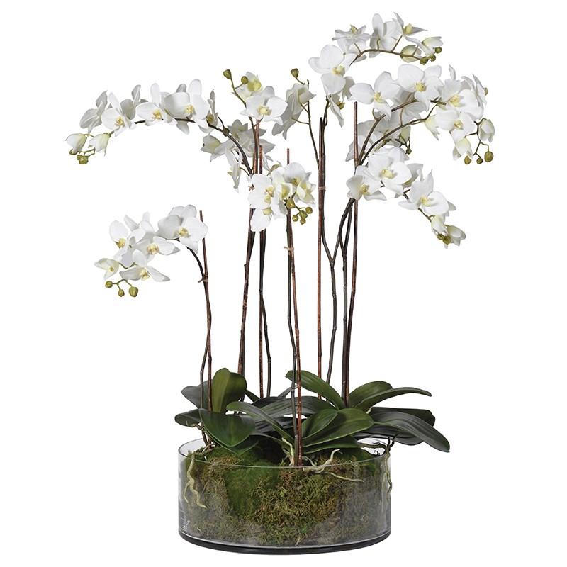 Tall Orchid & Moss  Glass Pot Plant