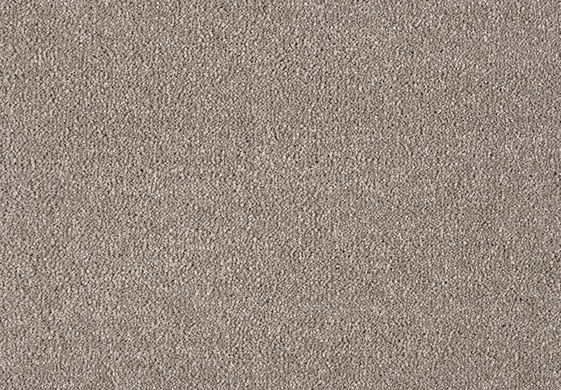 Celeste - Chicory