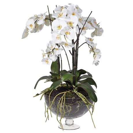 Large Orchid in Glass Footed Bowl